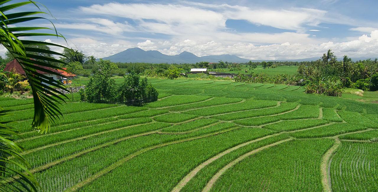 Shalimar Villas rice field view